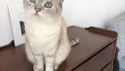 Cat Sitters Dubai - Cat 10