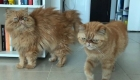 Cat Sitters Dubai - a pair of cats