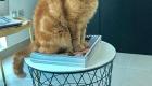 Cat Sitters Dubai - Cat 8